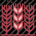 wheat, farming, grain, nature, fooda