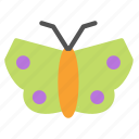 avatar, butterfly, insect, spring icon
