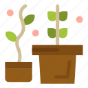growth, plant, potted