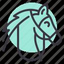 animal, horse, riding, stallion