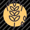 grain, millet, oat, wheat icon