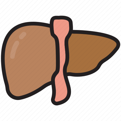 Body, health, human, internal, liver, medical, anatomy icon - Download on Iconfinder