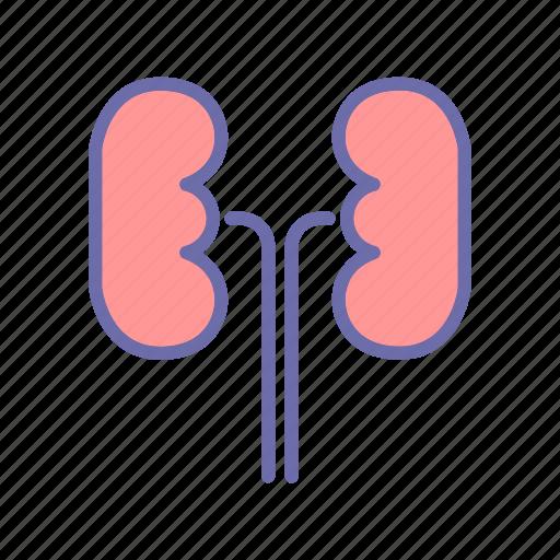 health, hospital, kidney, medical icon