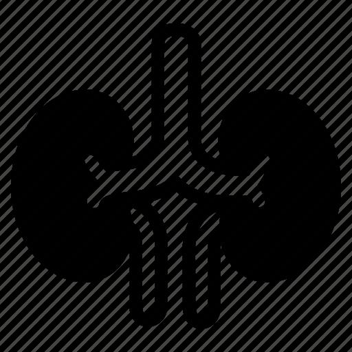 Health, hospital, human, kidney, organs icon - Download on Iconfinder