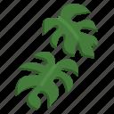 monstera, leaf, plant, flower, nature