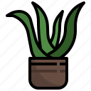 aloe, vera, plant, pot, farming, gardening, medical icon