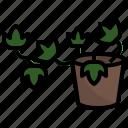 english, ivy, flower, plant, botanis, gardening icon