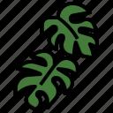 monstera, leaf, plant, nature, flower