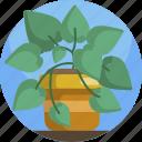 fern, green, house, leaf, plants, pot, vase