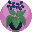 colorful, floral, flowers, house, leaf, plants, potted