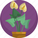 floral, flowers, house, interior, leaf, plants, pot