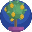 house, garden, tree, fresh, plants, lemon, indoor icon