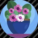 beautiful, floral, flowers, house, leaf, plants, vase