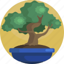 beautiful, bonsai, decoration, house, nature, plants, tree icon