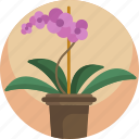floral, flower, growth, house, plants, pot, young