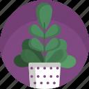 ecology, fern, home, house, modern, plants, vase