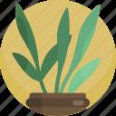 fern, green, house, leaf, nature, plants, vase