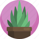 house, potted, interior, green, plants, indoor, aloe icon