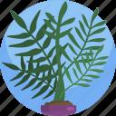 fern, green, house, interior, leaf, plants, vase
