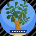 fern, green, house, interior, nature, plants, tree
