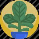 fresh, gardening, green, grow, house, leaf, plants