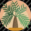 decorative, fern, house, modern, nature, plants, vase