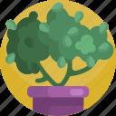 bush, gardening, green, house, nature, plants, tree