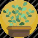 basket, fern, house, interior, leaf, nature, plants