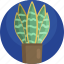 botanical, decoration, fern, green, house, plants, potted