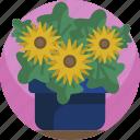 decorative, floral, flowers, house, nature, plants, vase