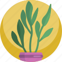 decorative, fern, green, house, interior, leaf, plants