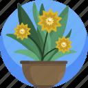 container, decoration, floral, flowers, house, plants, vase