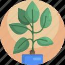 decorative, fern, green, house, leaf, plants, pot