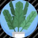 decoration, fern, green, house, leaf, modern, plants