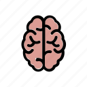 anatomy, brain, human, mind, organ icon
