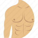 anatomy, body, body builder, muscle, shoulder icon