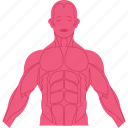 body, internal, physical, sinew, tendon icon