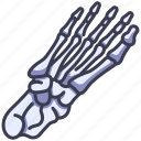 anatomy, body, bone, foot, human, skeleton, toe icon