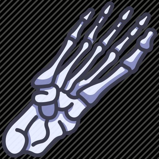 Anatomy, body, bone, foot, human, skeleton, toe icon - Download on Iconfinder