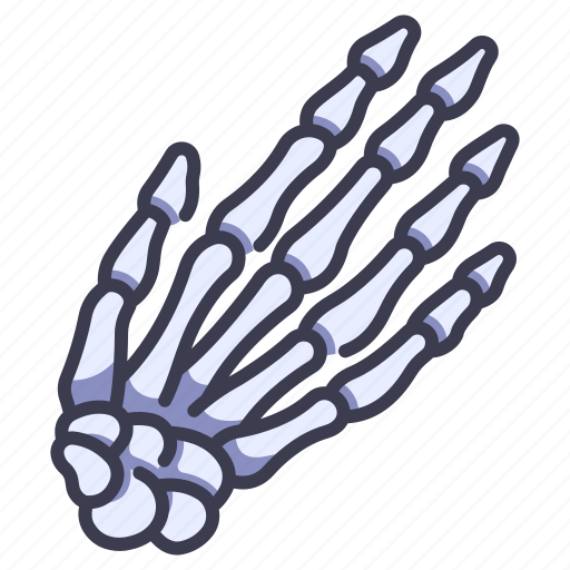 Anatomy, body, bone, finger, hand, human, skeleton icon - Download on Iconfinder