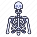 skeleton, body, human, anatomy, skull, bone, bones