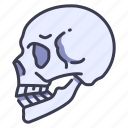 anatomy, body, bone, face, head, skeleton, skull icon