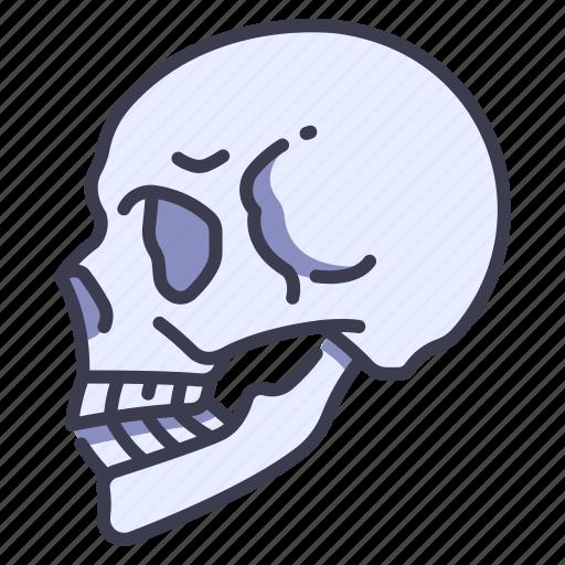 Anatomy, body, bone, face, head, skeleton, skull icon - Download on Iconfinder