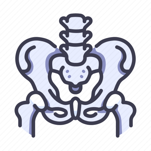 Anatomy, body, bone, human, medical, waist icon - Download on Iconfinder