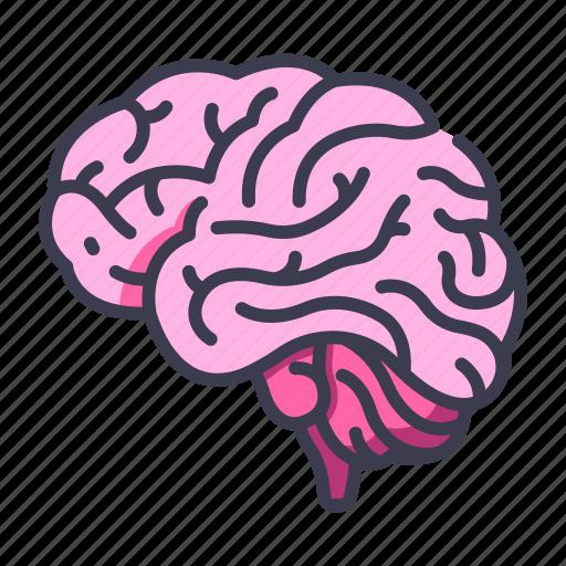 Body, brain, idea, intelligence, internal, mind, organ icon - Download on Iconfinder