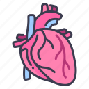 body, cardiology, heart, human, internal, medical, organ icon