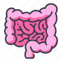 body, human, internal, intestine, medical, organ icon