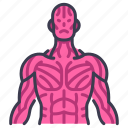 body, internal, muscle, organ, physical, sinew, tendon icon