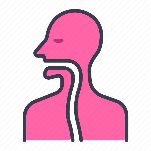 Body, health, human, internal, medical, organ, throat icon - Download on Iconfinder