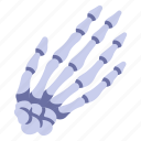 hand, skeleton, body, human, finger, anatomy, bone